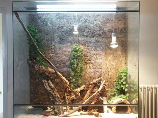 materiel terrarium pogona